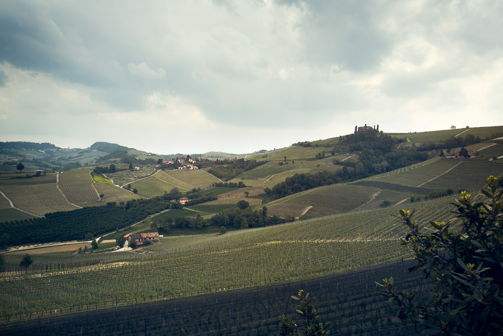 langhe vineyards wedding