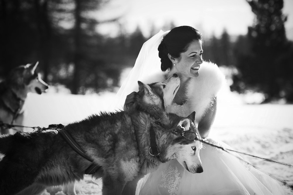 bride with sled dog winter wedding