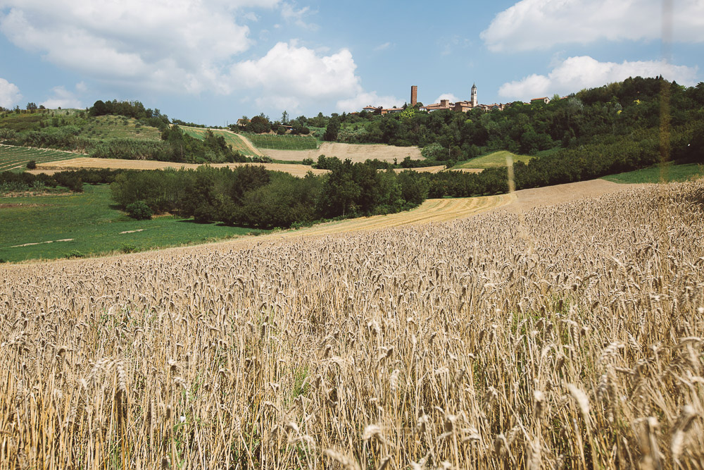 wheat field Italy